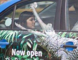 Taxi Crocodile