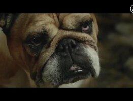 Bulldog Skincare: Investigation