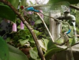 Biodiversity starts in your garden