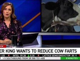 BK Cows' Menu