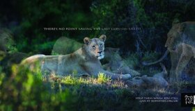 Most Powerful Wildlife Conservation Ads