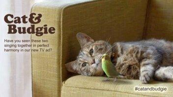 Cat & Budgie