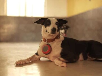 Music players, reflective collars, a rescue app: Tech is your pets' best friend