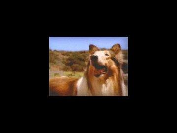 Lassie's Last Straw