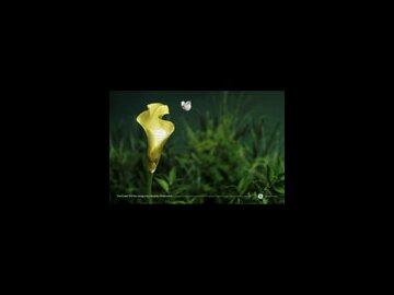 Flower (horizontal)