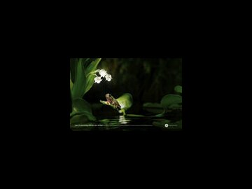 Frog (horizontal)