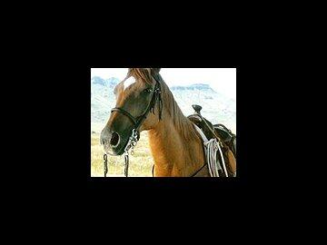 A Horse called Cynthia
