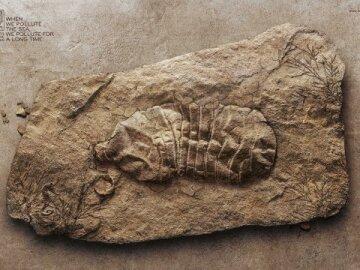 Fossile Bottle