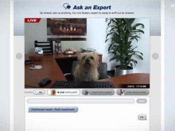 Subaru Dogs 2013: Facebook App