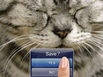 Fukushima Animals - Cats