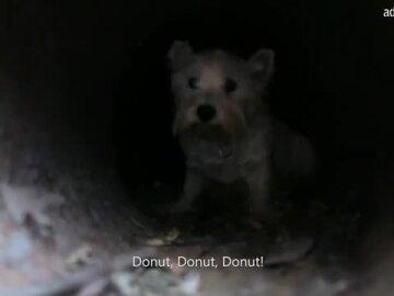 Skype Pet Detective
