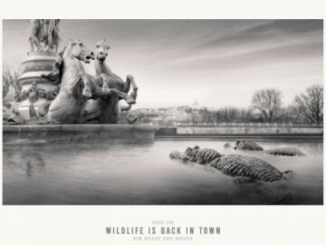 Wildlife is back in town #1