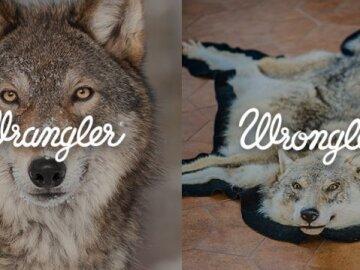 Wrangler. Wrongler 12