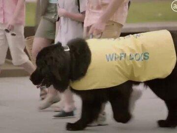 José's WiFi Dogs