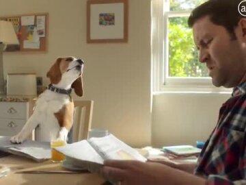 Jeremy the Beagle
