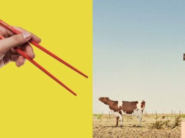 Chopsticks Cow