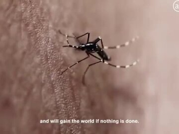 The Mosquito Killer Billboard