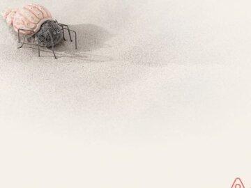 AIRBNB ANIMALS : SPIDER