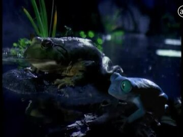 Bud Light Frogs #BudLightBeer