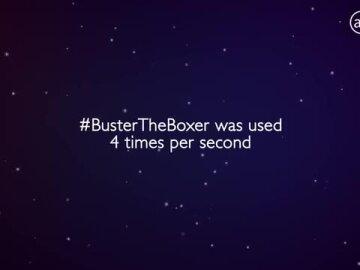 #BusterTheBoxer 2