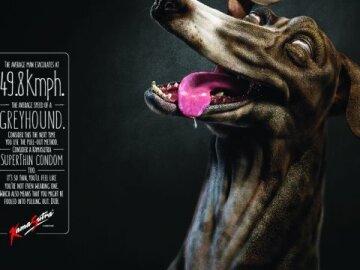 Ad dog