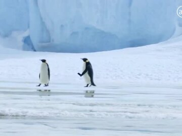 The Great Penguin Migration