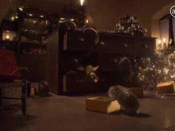 Entrez dans la magie de Noël en Provence