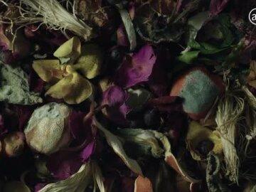I AM TRASH / Les Fleurs du Déchet