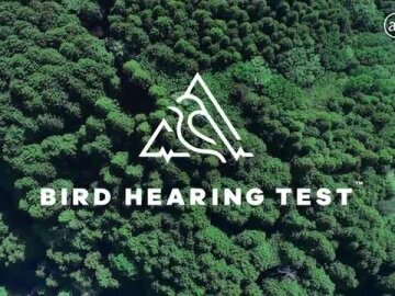 Bird Hearing Test