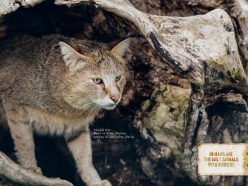 Animal borders (cat)
