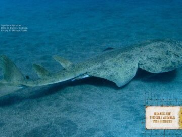 Animal borders (shark)
