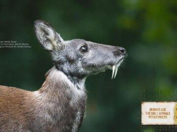 Animal borders (deer)
