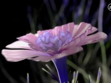 Brains in Bloom