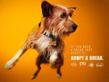 #AdoptABreak,1