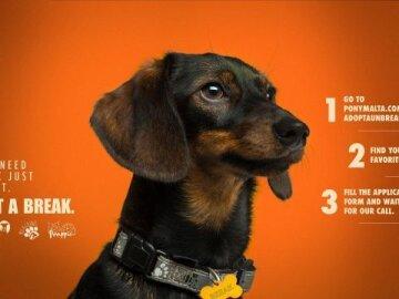 #AdoptABreak, 2
