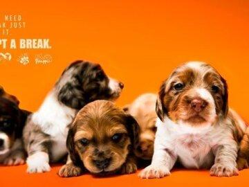 #AdoptABreak, 3