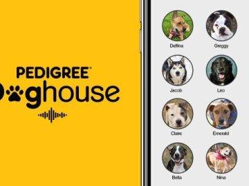 Doghouse 1