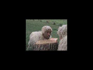 Sheepboys