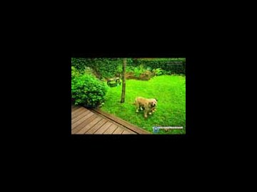 Dog (French)