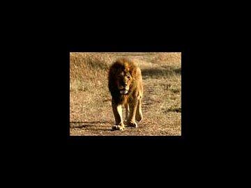 The Animal Documentary