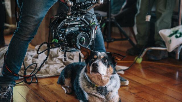 Follow You Until I Die: Film Construction for Quitline
