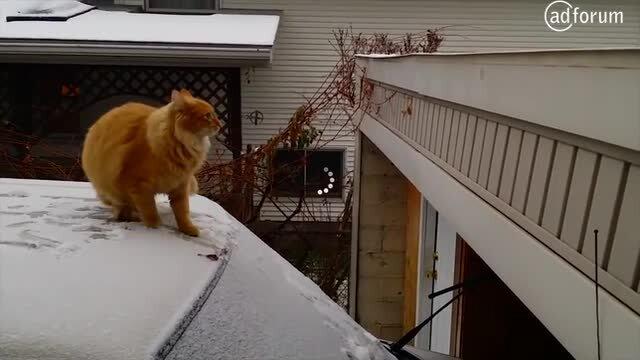 The Short-Cut-Cat!