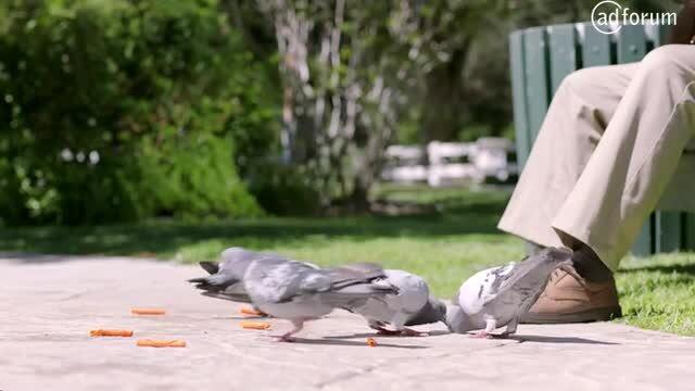 ¡Pigeon Xplosivo!