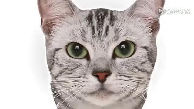 Miao, Meow, Mew & Mao