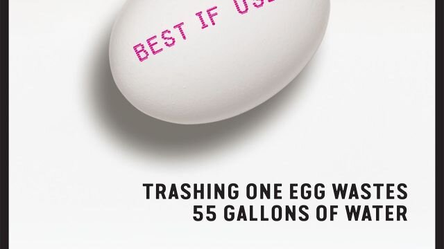 Trashing one egg wastes 55 gallons of water