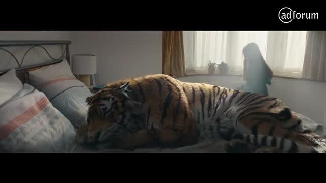A Tiger In Suburbia