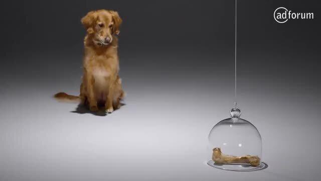 Dog - Teaser