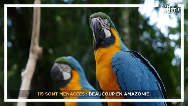 Jamy Gourmaud, Parrain de la Parrot Wildlife Foundation