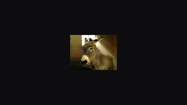 Born a Donkey