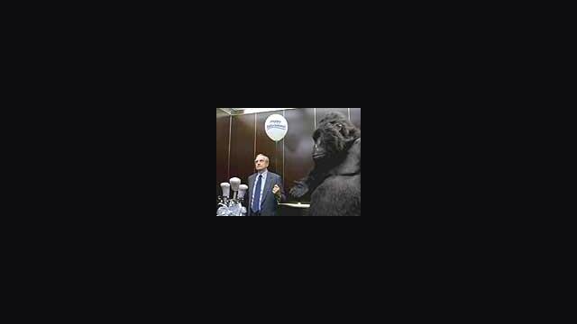Gorilla in the Elevator
